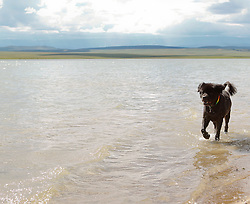 Dog enjoying time at a lake in New Mexico