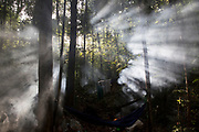 Morning sun light shines through the smoke from the camp fire of a hunting camp deep in the jungle.<br /> <br /> Evidence suggests that the Maniq, a Negrito tribe of hunters and gatherers, have inhabited the Malay Peninsula for around 25,000 years. Today a population of approximately 350 maniq remain, marooned on a forest covered mountain range in Southern Thailand. Whilst some have left their traditional life forming small villages, the majority still live the way they have for millennia, moving around the forest following food sources. <br /> <br /> Quiet and reclusive they are little known even in Thailand itself but due to rapid deforestation they are finding it harder to survive on the forest alone and are slowly being forced to move to its peripheries closer to Thai communities.