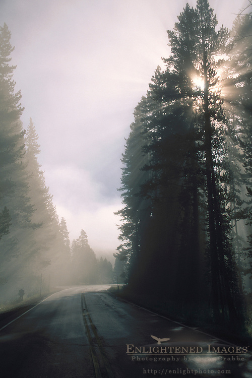 Sunrise & godbeams through pine trees over road in Hayden Valley, Yellowstone National Park, WYOMING