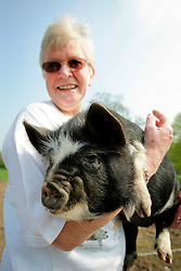 UK ENGLAND WILTSHIRE CHITTERNE 15APR07 - Ann Tritt (60) hold a Kune Kune piglet at the Paradise Pig Farm run by Tony York and Carron McCann. Under the 'Pig Perfect' banner the two run a joint farm specialising in rare breeds and offer courses on pig keeping...jre/Photo by Jiri Rezac..© Jiri Rezac 2007..Contact: +44 (0) 7050 110 417.Mobile:  +44 (0) 7801 337 683.Office:  +44 (0) 20 8968 9635..Email:   jiri@jirirezac.com.Web:    www.jirirezac.com..© All images Jiri Rezac 2007 - All rights reserved.