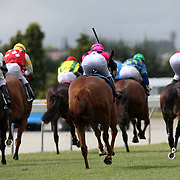 Horses head down the finishing straight during a day at the Races at the Gore Race Meeting, Gore, Southland, New Zealand. 18th December 2011. Photo Tim Clayton