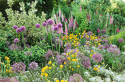 A section of the long border at Great Dixter. Planting includes Allium cristophii and A. giganteum, Erysimum allionii, Digitalis 'Glittering Prizes Mixed', Weigela 'Florida Variegata'