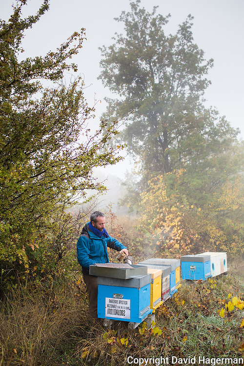 Bee keeper and honey maker Michele Tagliabue checks on some of his 100 + bee boxes.