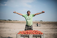 Foggia, Italia - 22 agosto 2013. Un immigrato bulgaro lavora in un campo di pomodori nei pressi di Foggia in Puglia.<br /> Ph. Roberto Salomone Ag. Controluce<br /> ITALY - An immigrant works in a tomato field near Foggia in the italian southern region of Puglia on August 22, 2013.