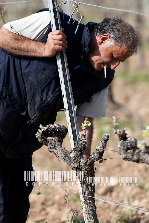 UN AN AU PIED DES VIGNES-STORY OF A FRENCH GRAPEWINE