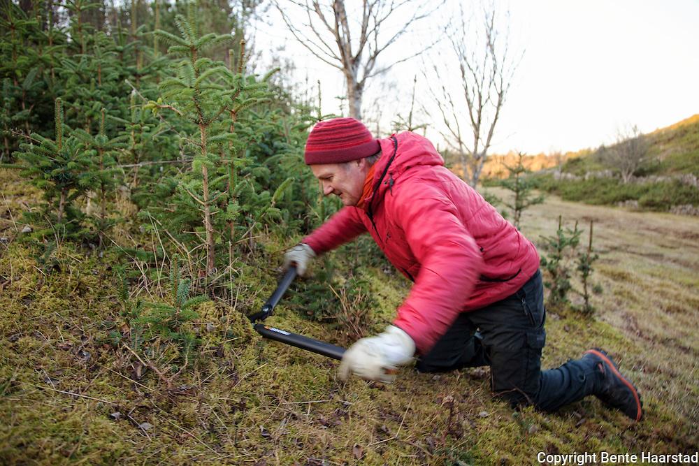 Roar Svenning, grunneier. Aksjon mot pøbelgran, sitgagran (Picea sitchensis), som er et svartelistet, fremmed treslag i Norge. Stokkøya i Sør-Trøndelag. Flere miljøorganisasjoner deltar, som Norsk botanisk forening, Naturvernforbundet og WWF.