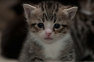 Foster kitten being cared for in home