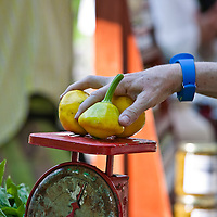 Patty Pan squash on a battered scale at a farmers' market.