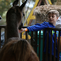 Drake Kowach, 9, feeds the animals at the petting zoo Saturday as a part of the Tupelo Buffalo Park's Pumpkin Patch