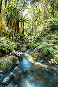 The stream after Kitekite falls at Piha. West Coast of New Zealand near Auckland