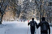 Skilangläufer, Langlauf Loipe, verschneiter Winterwald, Schnee, Winter, Torfhaus, Königskrug bei Braunlage, Harz, Niedersachsen, Deutschland | cross country ski track, forest, Brocken mountain, snow, winter, Harz, Lower Saxony, Germany