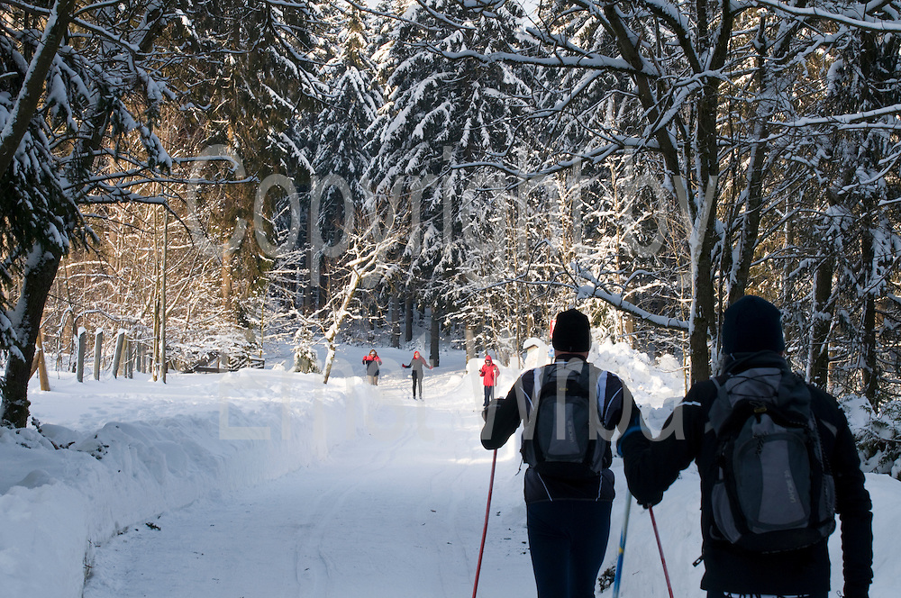 Skilangläufer, Langlauf Loipe, verschneiter Winterwald, Schnee, Winter, Torfhaus, Königskrug bei Braunlage, Harz, Niedersachsen, Deutschland | cross country ski track, forest, Brocken mountain, snow, winter, Harz, Lower Saxony, Germany