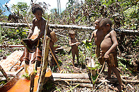 The young Korowai imatate there parents, here they have made a perfect working minature of the sago making trough there mother is using.