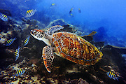 Scuba Diving in Playa Del Carmen w/ Nikon AW1<br /> <br /> Mexico Nov 2014<br /> <br /> Nikon AW1 in Underwater Mode w/ SB-N10 Flash<br /> <br /> #Nikon #PADI #DresselDivers #AW1 #OnAssignment