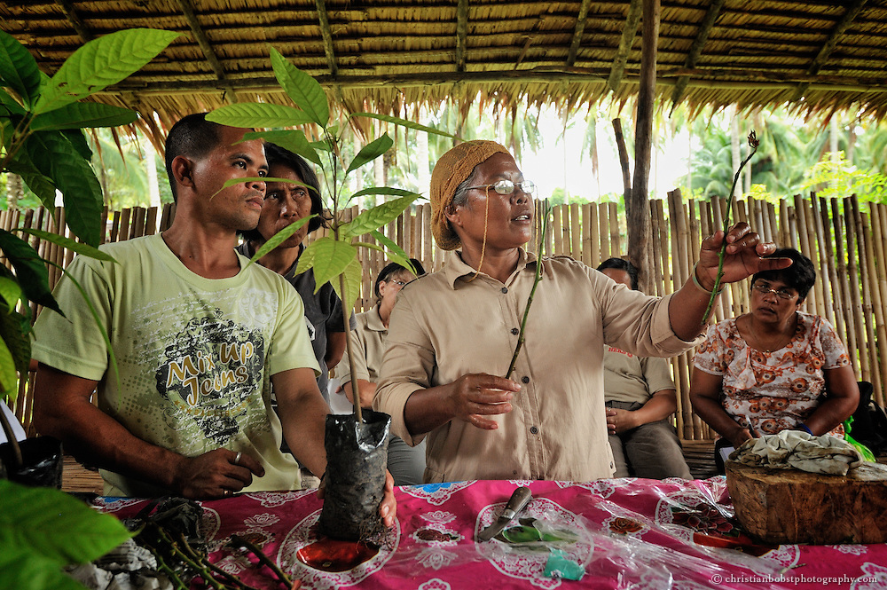 Damit die Bauern nicht ausschliesslich von Kokosnuss abhängig sind, lernen sie in Workshops, wie sie in einer diversifizierten Produktion auch andere Früchte und Gemüse anbauen können, z.B. Kakao.