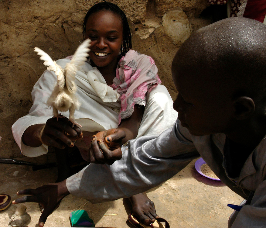 Polio survivor Maryam Umar, 15, plays with young chickens at her family compound in the Yakasi neighborhood of Kano. Once relatively independent because she was able to obtain a hand-powered tricycle, Umar has begun missing school because the chassis on her tricycle is broken and she does not have the money to repair it. Umar is engaged to another polio survivor she met at the Kano Polio Victims' Association.
