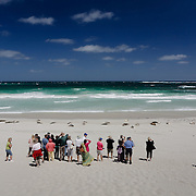 Tourists watching Sea lions on the white sand of Seal Bay. Kangaroo Island.