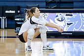 LIU Volleyball