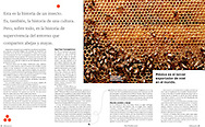 """""""Las damas de la miel"""".  Revista QUO 205, noviembre de 2014"""