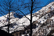 Bare tree branches silhouetted against the San Juan Mountain range in the Rocky Mountains near Telluride, Colorado