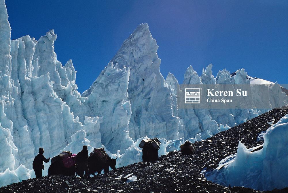 Yak caravan in Rongbuk Glacier enroute to Mt. Everest, Tibet, China