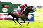 ROARING LION (6) with jockey Oisin Murphy in the saddle goes to post before winning The Group 2 Betfred Dante Stakes over 1m 2f (£165,000) at the York Dante Meeting at York Racecourse, York, United Kingdom on 17 May 2018. Picture by Mick Atkins.