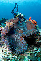 Diver and Enormous Giant Clam.Shot in West Papua Province, Indonesia