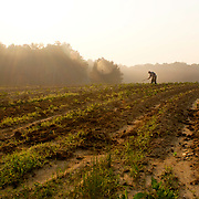 A farmer works with a traditional hoe in a field in the early morning in Chatham County, NC.