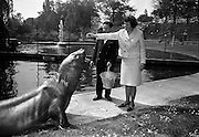 "14/05/1965<br /> 05/14/1965<br /> 14 May 1965<br /> National Seafood Cook 1965, visits the Zoo. Miss Mary Kenny of Donaghmore, Dundalk, the BIM ""National Seafood Cook 1965"", visited the Zoological Gardens, Dublin and fed the best fish eater in Ireland- an elephant seal which recently arrived from the Falkland Islands."