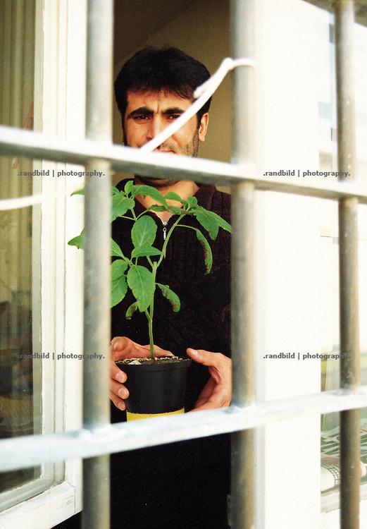 Ein Häftling der Justizvollzugsanstalt Celle-Salinenmoor zeigt seine selbstgezogene Pflanze durch die Gitter seiner Zelle. An inmate of tghe prison Celle-Salinenmoor.
