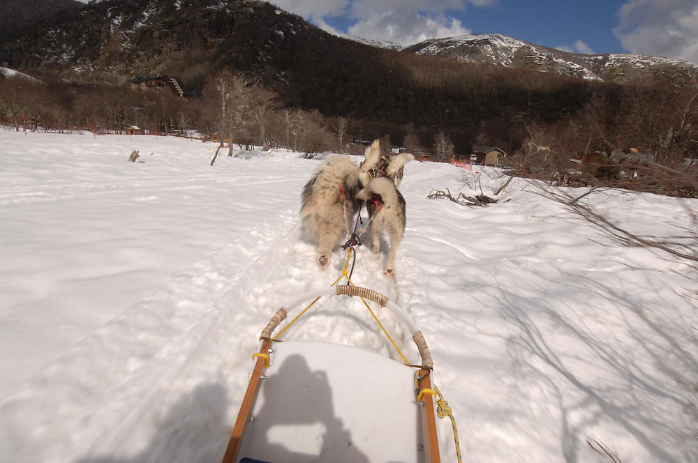 Dogsledding in Termas de Chillan, Chile