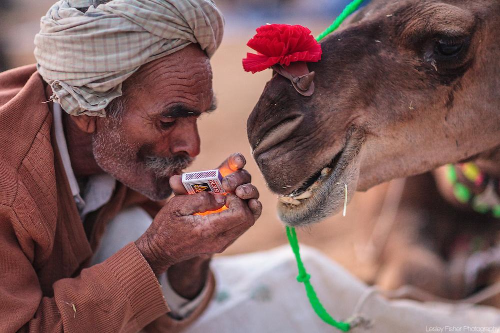 Camel trader smoking a cigarette with his camel at the Pushkar Camel Fair, Rajasthan, India.