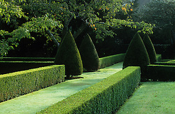 Grass avenue with clipped box hedges and yew topiary cones at Hinton Ampner
