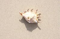 Feb 06, 2008; Honolulu, HI - Seashells at Lanikai Beach..Photo credit: Darrell Miho