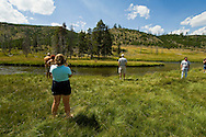 Tourist and Bull elk (Cervus canadensis) beside Firehole River in Yellowstone National Park, Wyoming