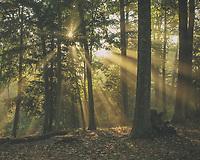 Morning sun beams.