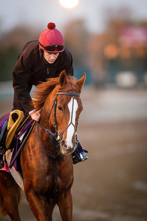October 29, 2015:  Alice Springs (IRE), trained by Aidan P. O'Brien and owned by Mrs. John Magnier, Michael Tabor & Derrick Smith, exercises in preparation for the Breeders' Cup Juvenile Fillies Turf at Keeneland Race Track in Lexington, Kentucky. Alex Evers/ESW/CSM