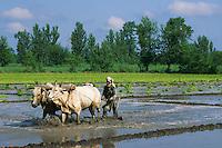 Pakistan, Khyber Pakhtunkhwa, vallee de Swat // Swat Valley, Khyber Pakhtunkhwa, Pakistan
