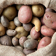 Allotment potatoes