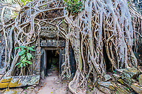 tree roots around door at Ta Prohm Angkor Wat Cambodia