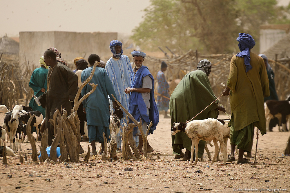 Viehmarkt in YOUNOUFERE, Senegal