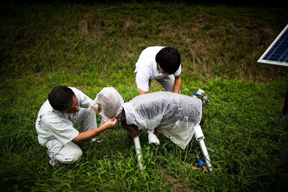 """CHIBA, JAPAN - AUGUST 10:  Members of JA Kisarazu-shi, shows a robot named """"Super Monster Wolf"""" a solar powered robot designed to scare away wild animals from farmer's crops in Kisarazu, southwestern Chiba Prefecture, Japan on August 10, 2017. (Photo by Richard Atrero de Guzman/AFLO)"""