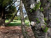 2013 Varsity Golf