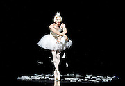 Les Ballets Trockadero de Monte Carlo <br /> at the Peacock Theatre, London, Great Britain <br /> press photocall <br /> 16th September 2015 <br /> <br /> <br /> Programme 1<br /> press night 16th September 2015 <br /> <br /> <br /> <br /> <br /> Dying Swan <br /> <br /> Joshua Thake as Eugenia Repelskii <br /> <br /> <br /> <br /> Photograph by Elliott Franks <br /> Image licensed to Elliott Franks Photography Services