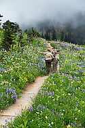 An adult hiker points to the wildflowers surrounding the trails at Tipsoo Lake  in Mount Rainier National Park, Washington State, USA.