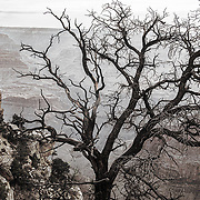 A tree silhouette on the edge of Arizona's Grand Canyon National Park.