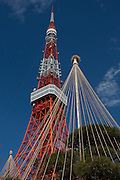 Yukitsuri or snow ropes on a tree in front of Tokyo Tower. Tokyo, Japan. Friday February 3rd 2012