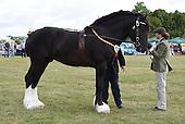 Class 04 & 12 - Colt or Stallion Shire & Foal Suffolk