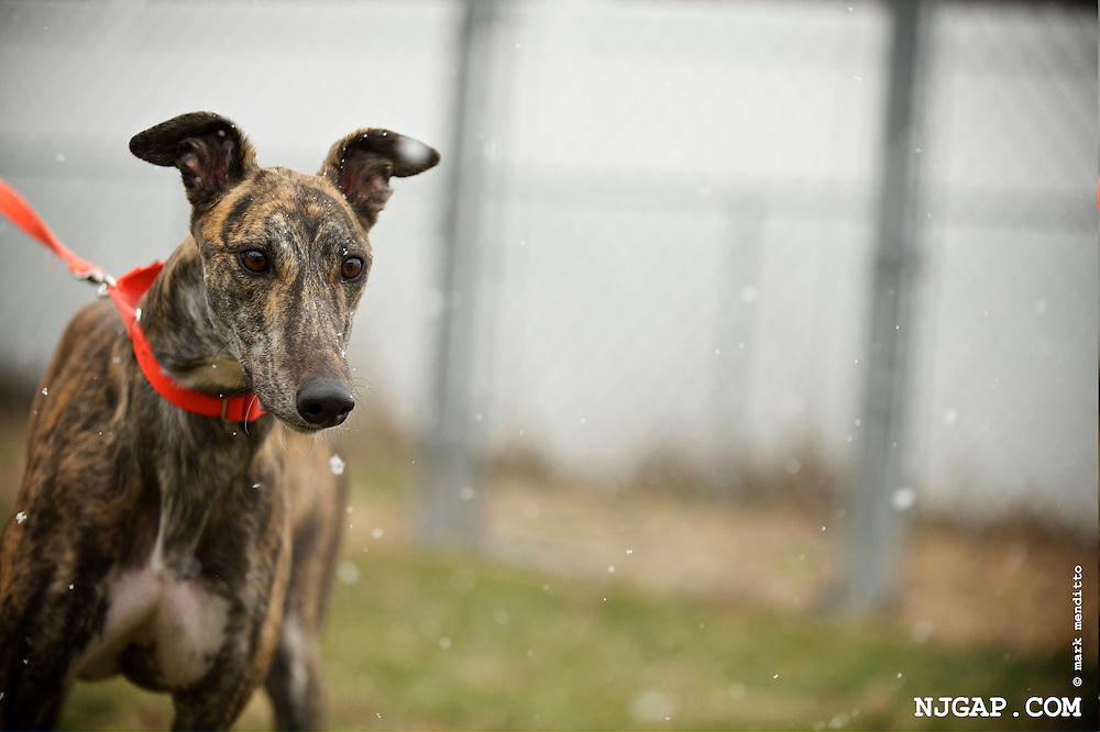 Boomtown, 2013-03 Greyhound Adoption Intake