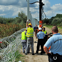 Work on a higher border fence with Serbia just by the gap in the present razorwire fence through which refugees are passing using an old railway line.The flow  into Hungary continues unabated. Refugees will be stopped by police and held in a field a kilometre away.  The official border reception centres are full and refugees must camp on the ground, dependent on food donated by volunteer groups